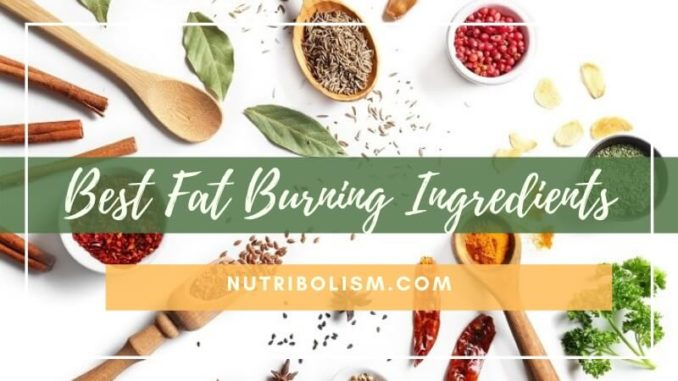Fat Burning Ingredients